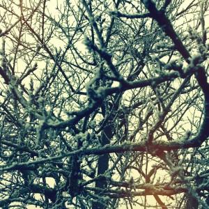 In my garden frosting garden photographer music jazz tree lighthellip